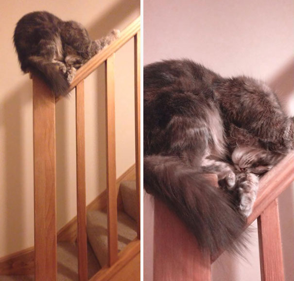 Of All The Places A Cat Could Choose To Get Some Sleep…