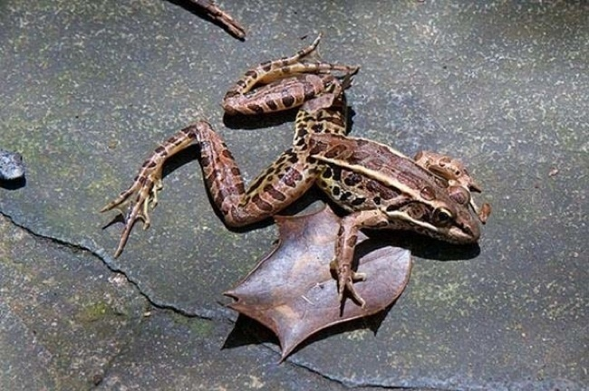 In 1997, a Mexican town had a storm where frogs fell from the sky