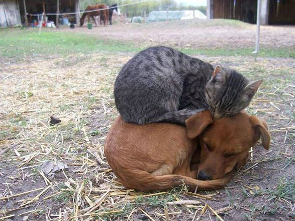 Buddies forever!