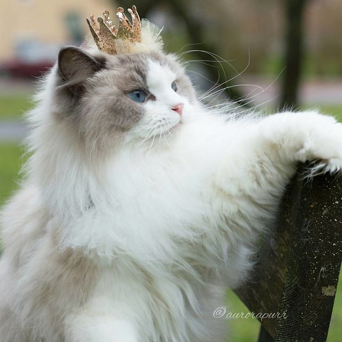 She's royalty