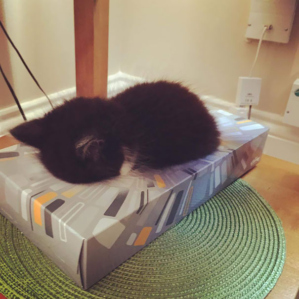 He fell asleep in a tissue box