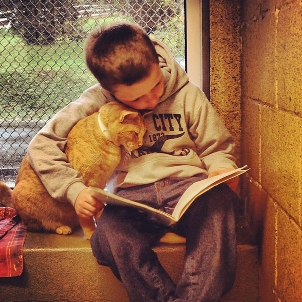 Kid reads to a shelter cat