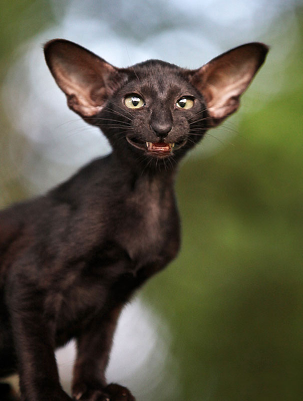 This bat-cat is so funny