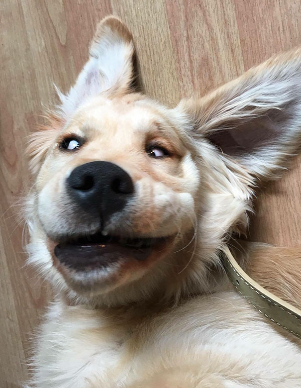 This dog isn't exactly photogenic