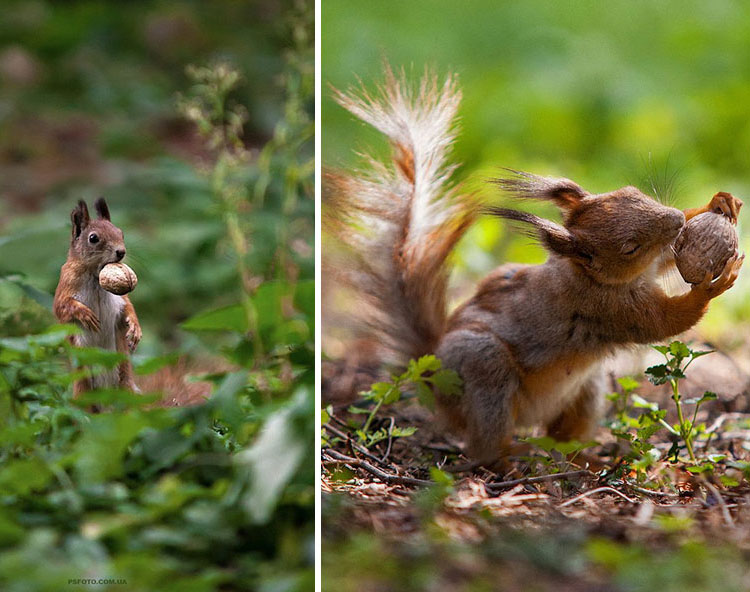 Precious nut