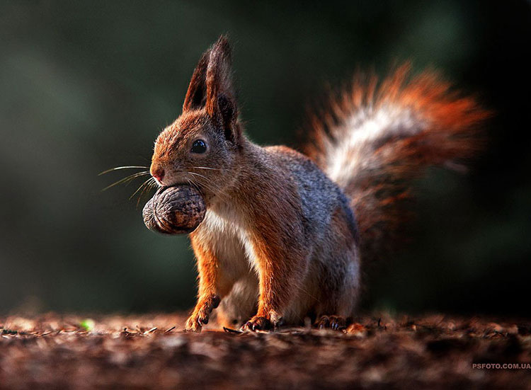 The photographer loves squirrels and so do we!
