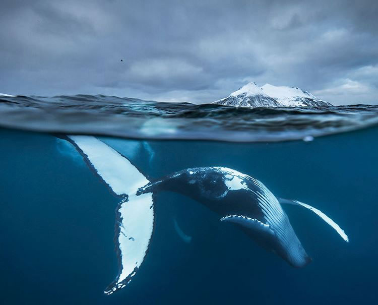 Ocean life is so breathtaking