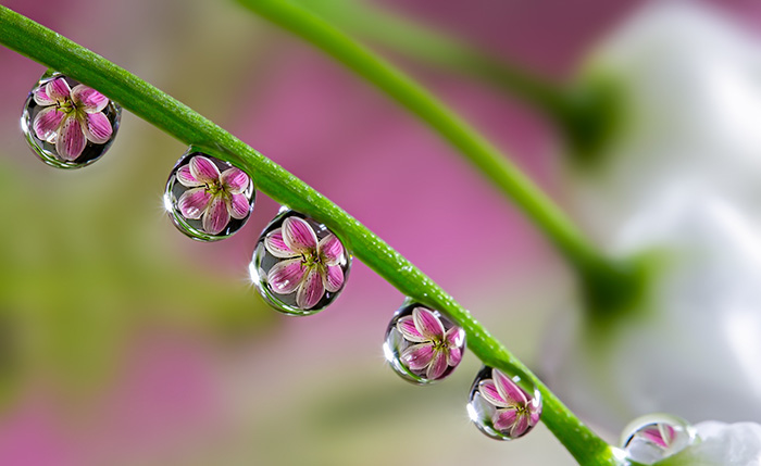To See Flowers In Water Drops
