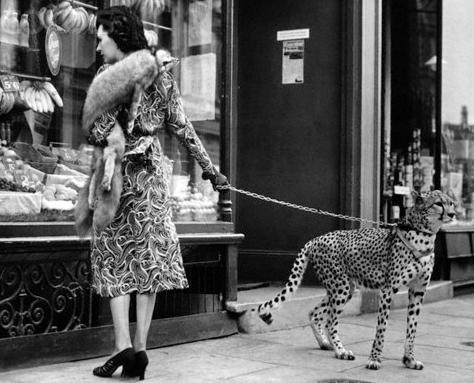 Josephine Baker's cheetah