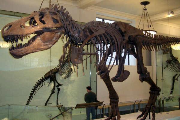 A complete dinosaur was stolen in Australia