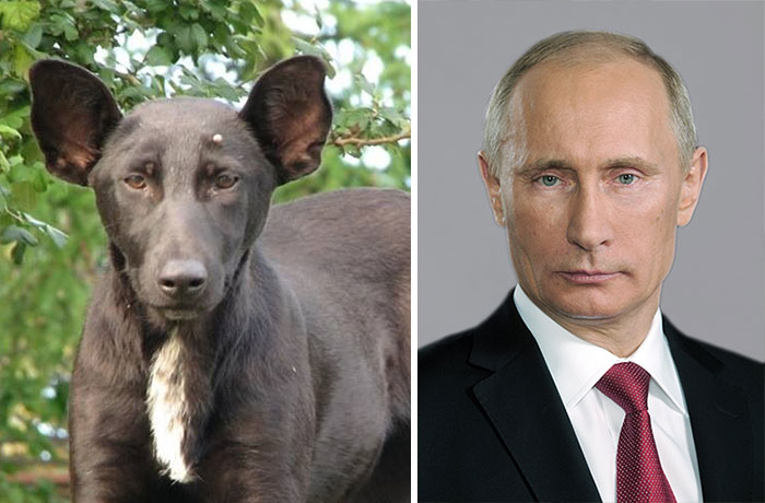 Vladimir Putin and the serious dog