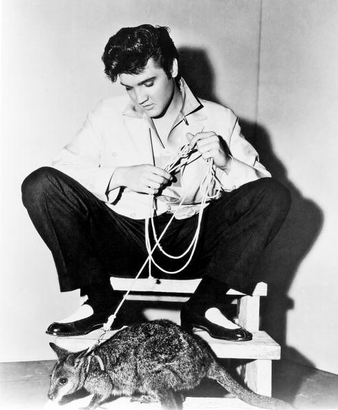 The curious pet of Elvis Presley
