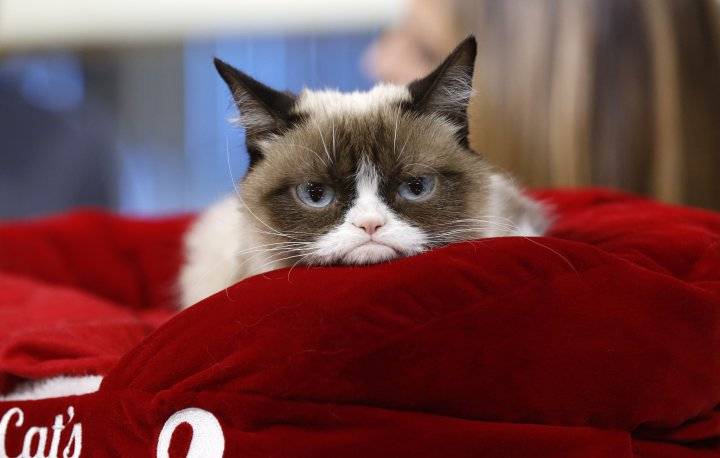 Grumpy Cat built an empire!