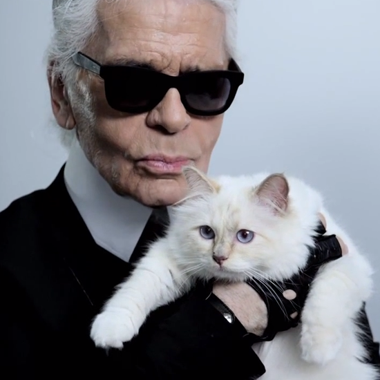 The cat Choupette Lagerfeld