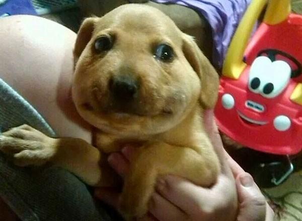 Cachorro-abeja-600x440