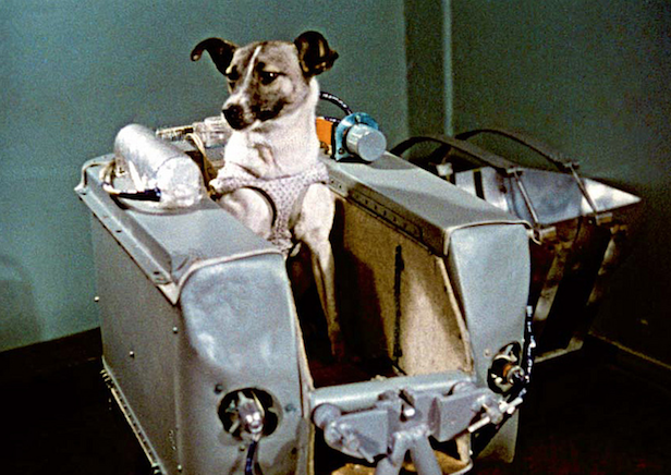 LIE: The first animal that went to the moon was Laika