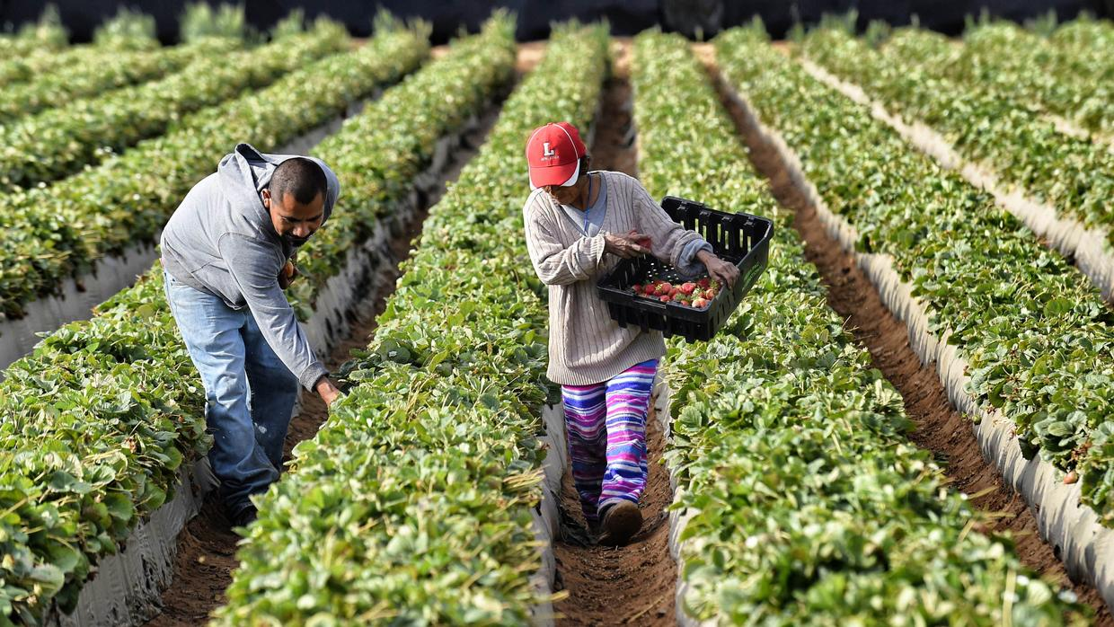 Agriculture: Thousands of workers die each year