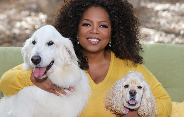Oprah Winfrey and her millionaire dogs!