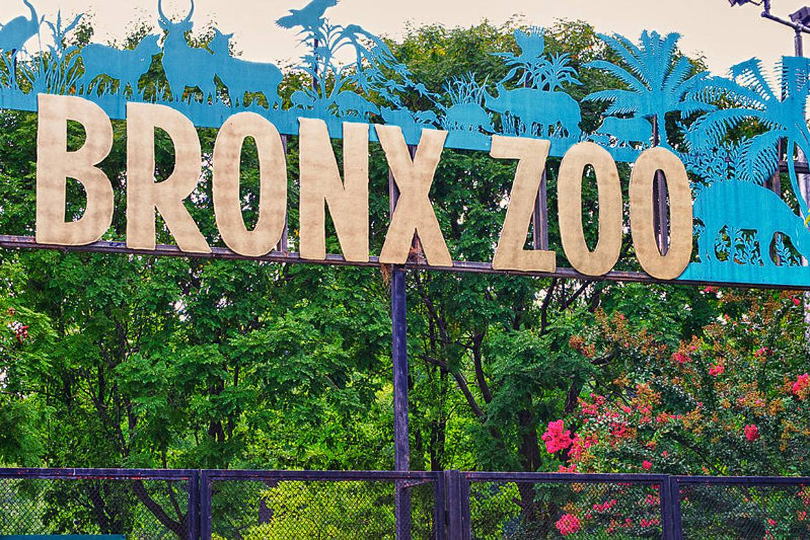 Zoos would release their animals and they would dominate cities