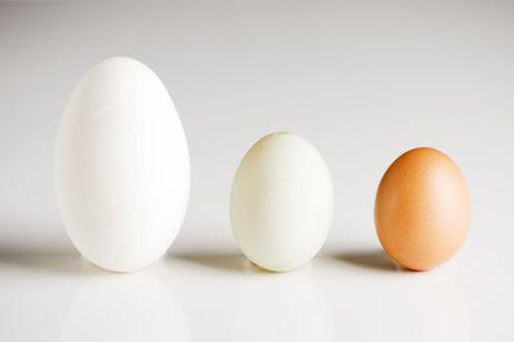 Different sizes of eggs