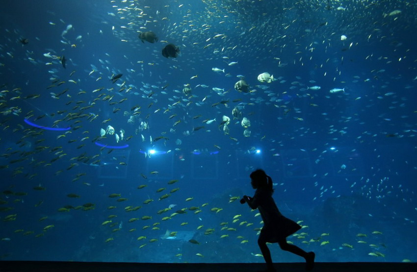 China Opens World's Largest Aquarium