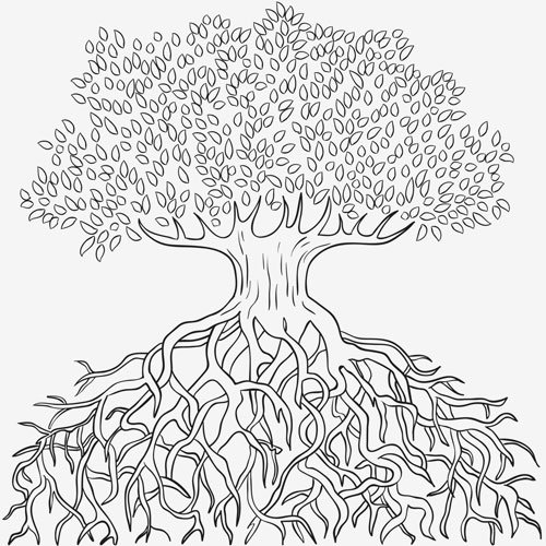 Draw trees with roots