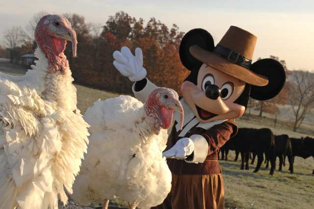 The turkey that the President of the USA forgives on Thanksgiving is sent to Disney