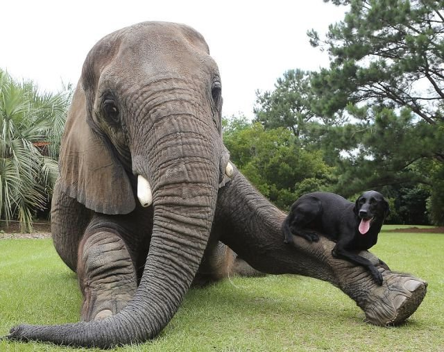 An elephant who adopted a puppy