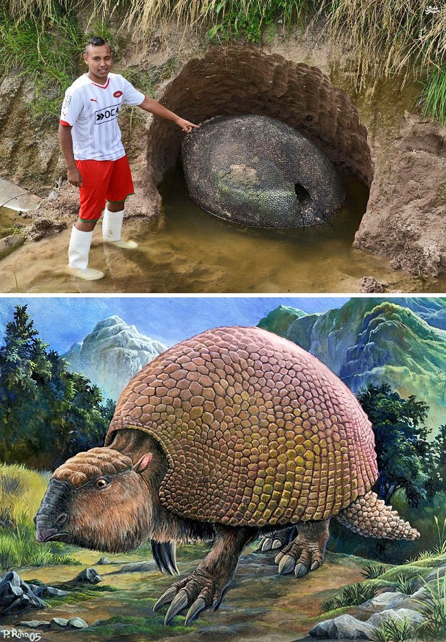 The shell of a prehistoric armadillo