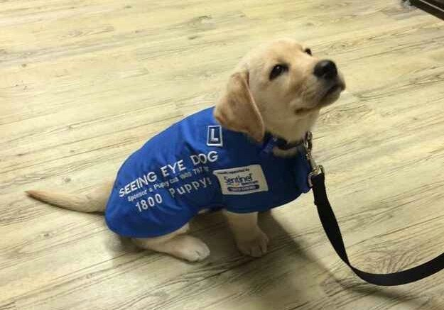 If they have a kind personality they become guide dogs