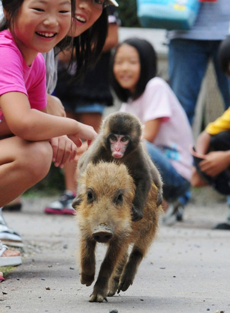 Pig and Monkey
