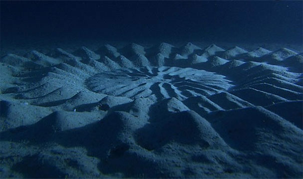Underwater crop circles