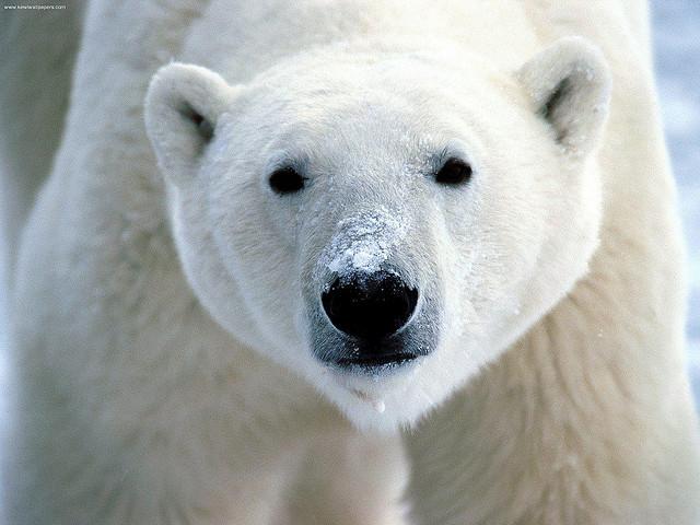 All polar bears are lefthanded!
