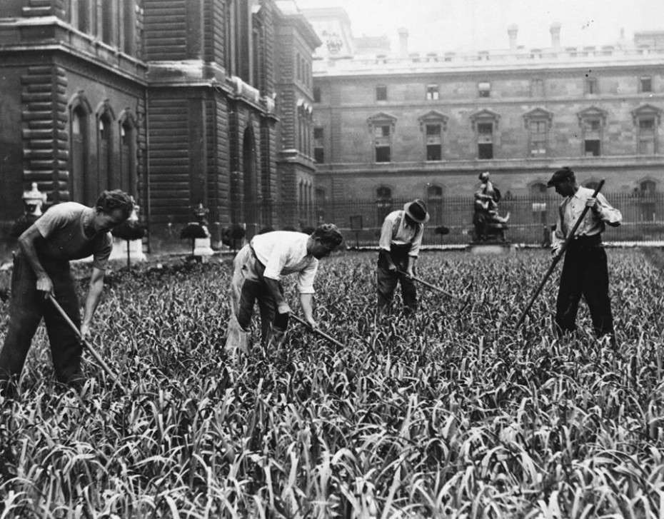 Cultivating at the Louvre in Paris