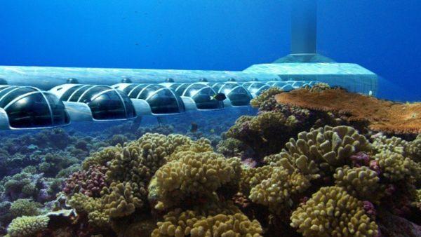 Underwater in Zanzibar