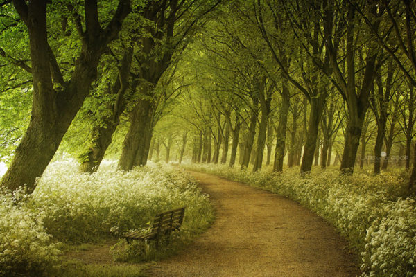 Spring Blossom - Netherlands