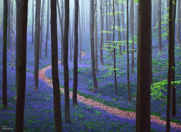 Enchanted Forest - Belgium