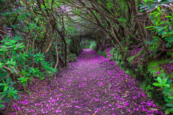 Flowery Path - Ireland