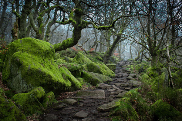 Enchanted path - United Kingdom