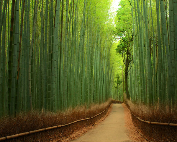 Bamboo brilliance - Japan
