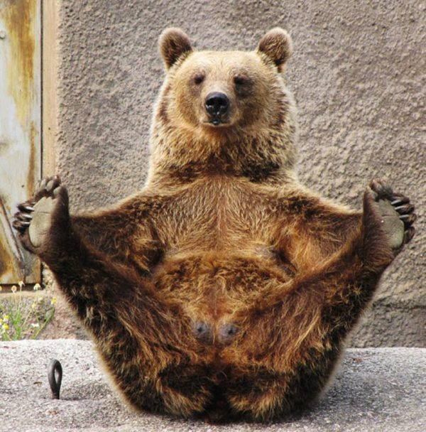 17. Stretch as if nobody's watching bear!