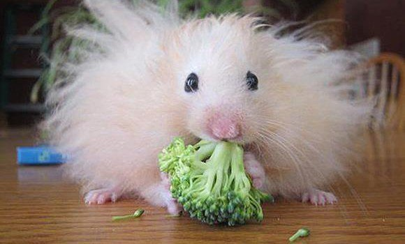 11. Broccoli mouse.