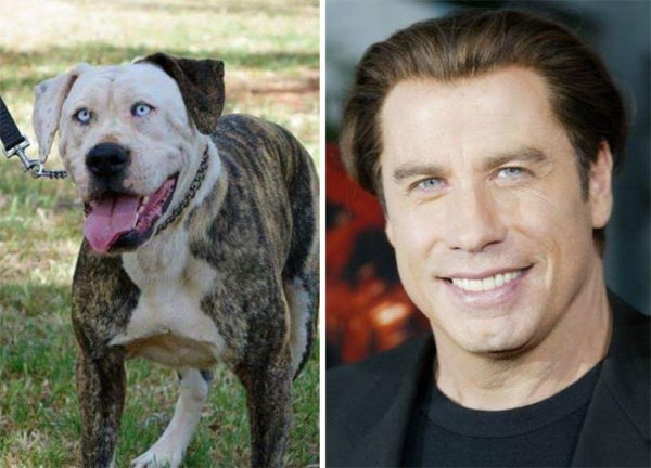 John Travolta vs blue eye dog.
