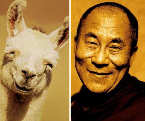 Dalai Lama vs llama.