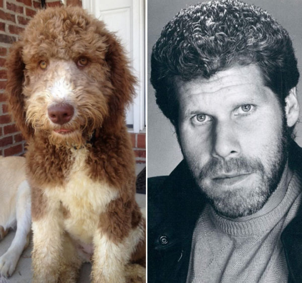 Ron perlman vs curly hair dog.