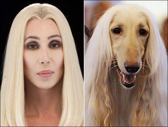 Cher vs Afghan Hound