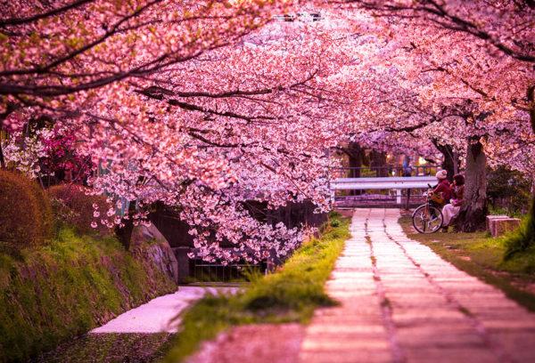 Pink Love - Japan