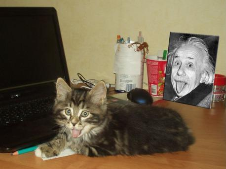 Einstein cat.