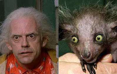 Christopher Lloyd vs Aye-aye