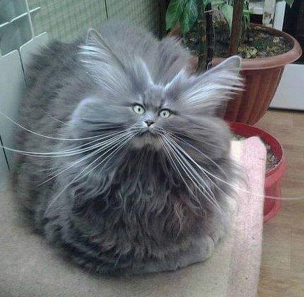 10. Cat worst hair day.